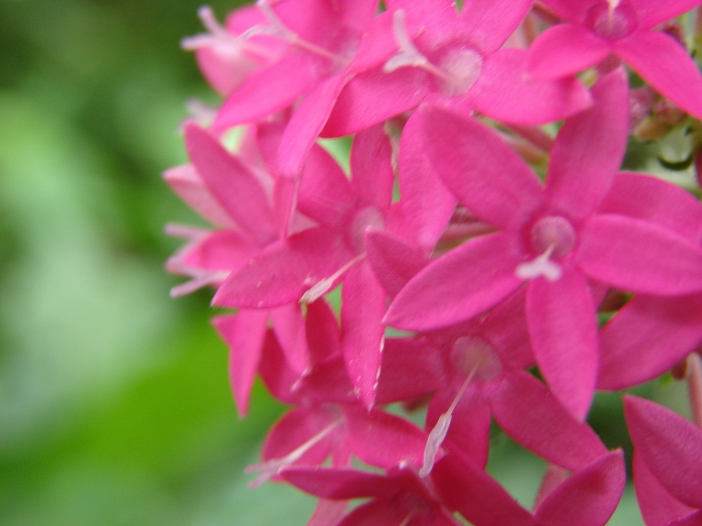 Flowers at karanji kere